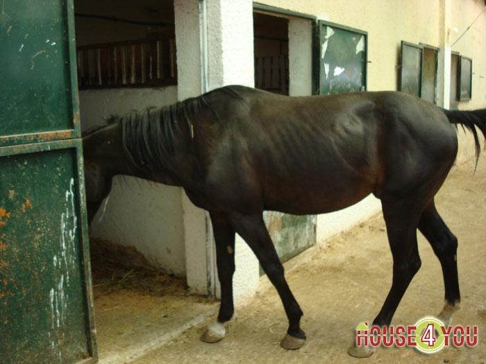 Επιχείρηση 14,5 στρεμμάτων με άλογα και στρουθοκαμήλους